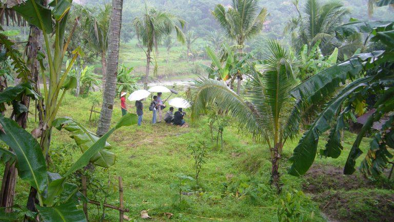 Indonesia – Rain forest